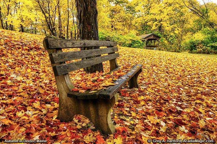 A park bench covered with leaves