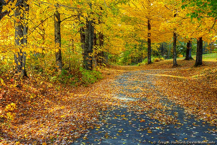 Gorgeous autumn scene with yellow and orange leaves in Dexter, Maine