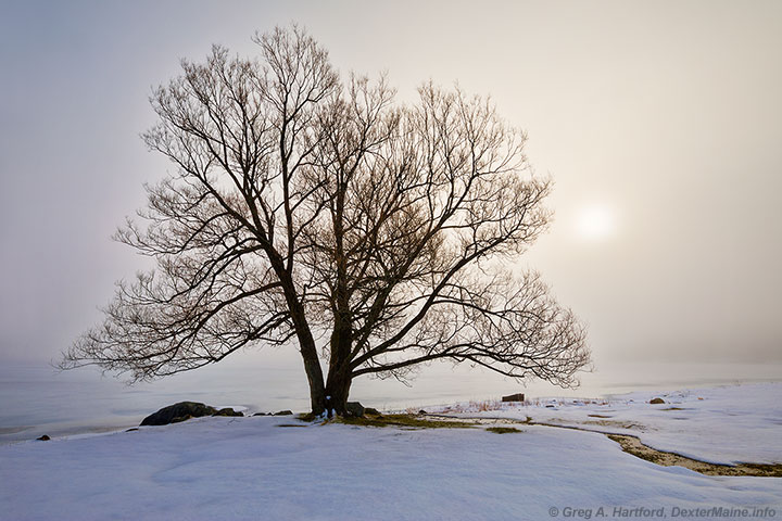 Rising sun in heavy fog & snow with silhouette of tree at Lake Wassookeag